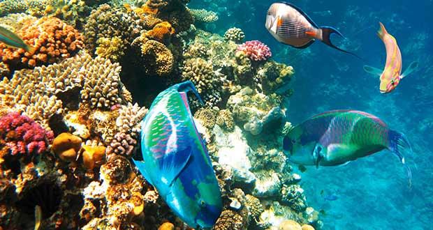 Горящие туры из Москвы, Спб и Регионов 2021 ✈ Turs.sale - arab egypt ssh sharm sheikh diving sea fish 1